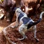 beardog12's Avatar